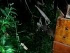 Veado-catingueiro em recuperação na ONG Mata Ciliar é solto; veja vídeo