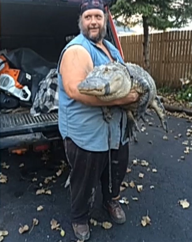 Jacaré de 2 metros que era mantido como animal de estimação havia 26 anos  (Foto: Reprodução/YouTube/Fox)