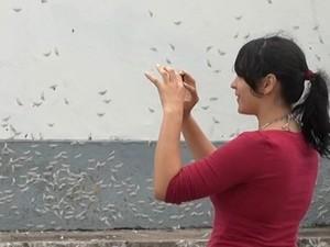 Moradora registra imagem de mariposas em Prado, na Bahia (Foto: Imagem/TV Bahia)