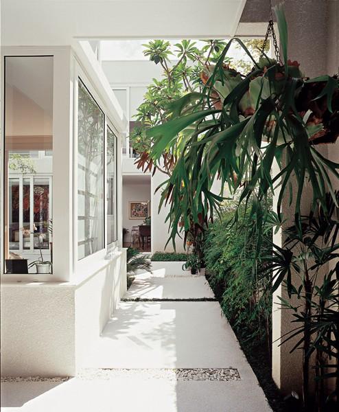 As folhas verde-escuras são uma das características das plantas de sombra. No corredor coberto, com piso de fulget, por onde trafega o cachorro, margeiam a parede palmeiras-ráfis (Rhapis excelsa) e nandinas (Nandina domestica). (Foto: Ricardo Novelli)