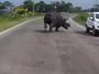 Rinoceronte assusta motoristas em estrada na Índia