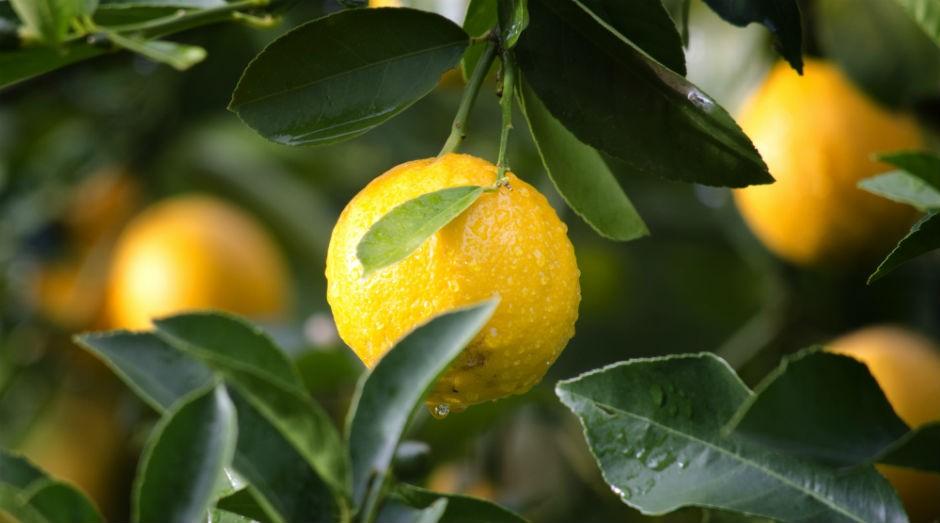 Fruta no pé: evento foca em empreendedor rural (Foto: Divulgação)