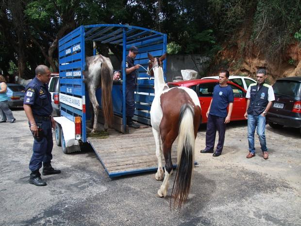 Animais irão passar por avaliação de veterinário (Foto: Divulgação/PMP)