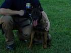Morre 1ª cadela usada pela PRF para farejar explosivos
