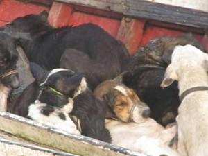 Cães Caçados Prefeito Santa Cruz do Arari Pará (Foto: Reprodução/TV Liberal)