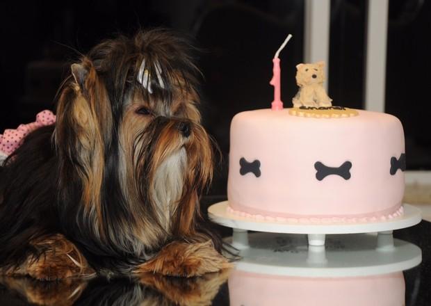 Chanel, a  filhote de yorkshire terrier de Eliana Amaral, posa com o bolo (Foto: Arquivo Pessoal/Divulgação)