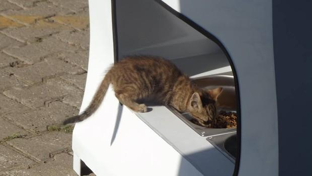 Estima-se que haja 100 mil gatos e cães de rua famintos em Istambul. Com as máquinas de reciclagem inteligentes, esse número deve diminuir (Foto: Divulgação)