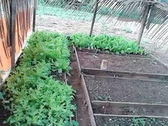 Polícia abriu inquérito para apurar morte de criança que comeu couve da horta dos avós. (Foto: Arquivo pessoal)