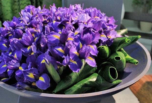 Iris Germanica ()