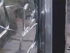 Urso usa pedra e quebra proteção de vidro de recinto em zoo nos EUA