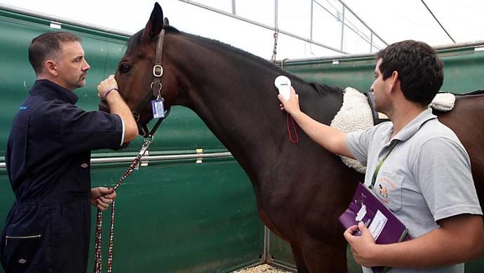 Cavalos the best jump desembarque (Foto: Ivan Andrade/Divulgação)