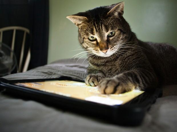 O site Cachorro Perdido foi criado para ajudar a promover encontros entre tutores e animais perdidos  (Foto: Shutter)