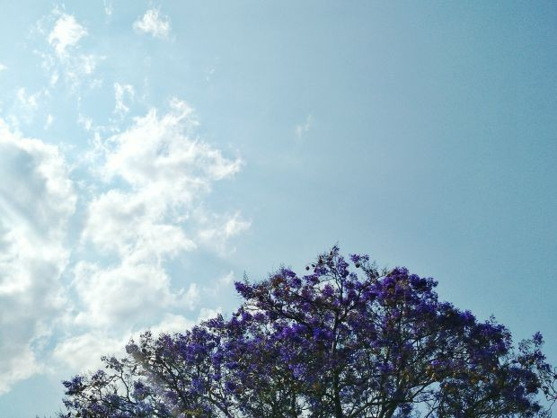Poucas nuvens no céu de Campo Grande que tem clima ameno (Foto: Adriel Mattos/G1 MS)