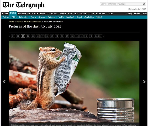 Esquilo parece ler informações de embalagem. (Foto: Reprodução/Daily Telegraph)