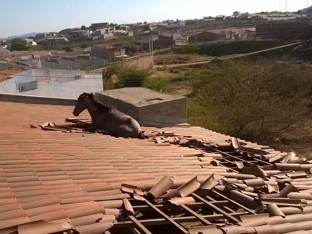 Cavalo foi parar em cima de telhado de casa após 'errar' caminho em Cajazeiras, na Paraíba (Foto: Cícero Segundo / Corpo de Bombeiros)