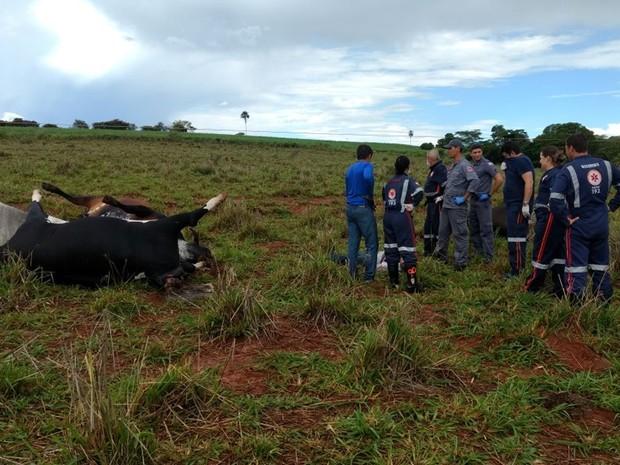Animais morreram depois de um fio de alta tensão cair no pasto (Foto: Reprodução/TV Tem)