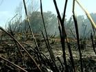 Incêndio no Parque Estadual de Itaúnas é controlado