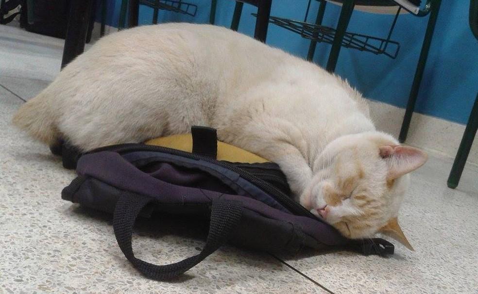 Branco dorme em cima da mochila de aluno (Foto: Arquivo Pessoal)