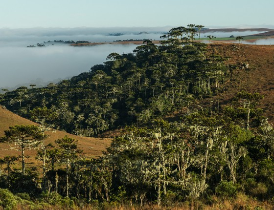 Floresta com araucária e campos naturais  (Foto: Zig Koch - divulgação)