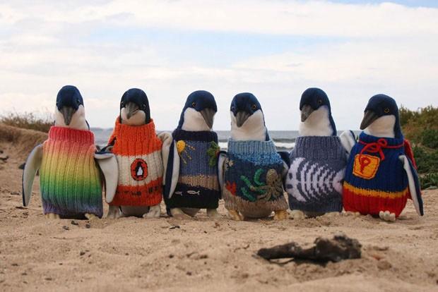 Alfred Date (Foto: Penguin Foundation / Divulgação)