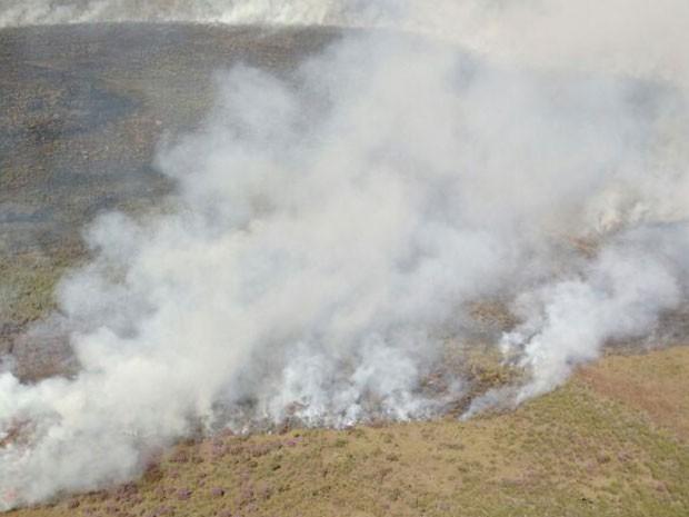 Resultado de imagem para fogo no parque nacional de brasilia