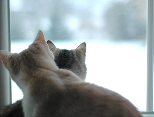 Gatos 2 (Foto: SXC)