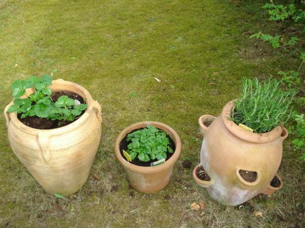 Mudas de temperos e folhas para chás são boas opções para uma horta em casa (Foto: Divulgação/Pixabay)