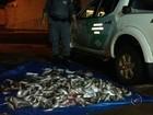 Polícia apreende carne de capivara e peixes escondidos em van escolar