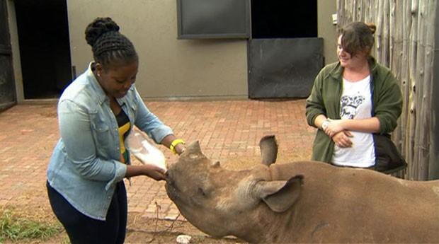 Rinocerontes (Foto: Reprodução/BBC)