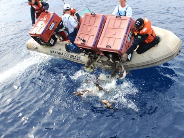 Pinguins são lançados ao mar pelas equipes durante a operação, realizada em São Sebastião. (Foto: Divulgação/Instituto Argonauta)