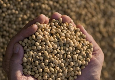 agricultura_soja (Foto: José Medeiros/Ed.Globo)