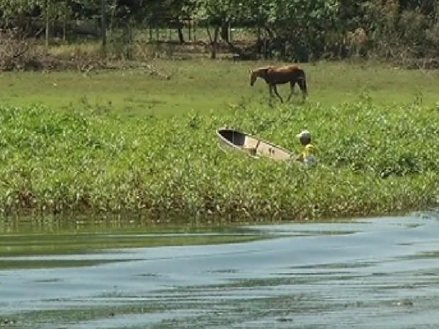 Pescador praticamente some em meio as plantas aquáticas em Cardoso (Foto: Reprodução / TV Tem)