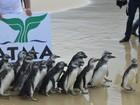 SC terá dois novos espaços para tratamento de animais marinhos