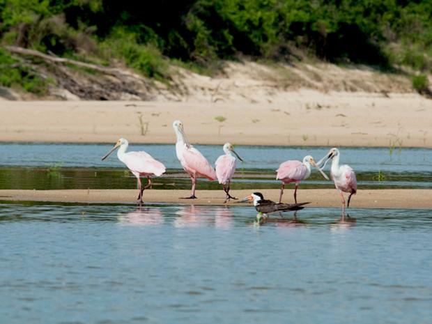 Fauna rica no Parque estadual do Cantão, no Tocantins (Foto: José Paiva/ATN Divulgação)