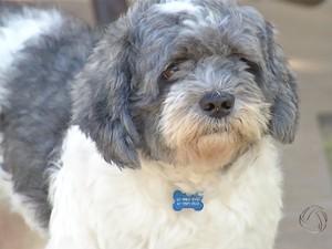 Residências de MS possuem mais cachorros do que crianças (Foto: Reprodução/TV Morena)