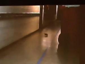 Imagem gravada por celular mostra animal no corredor da Santa Mônica (Foto: Reprodução/TV Gazeta)