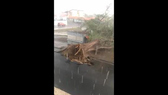 Chuva forte derruba árvores, postes e teto de igreja em Floriano; veja vídeo