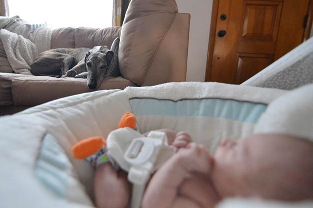 cão e bebê 08 (Foto: Instagram)