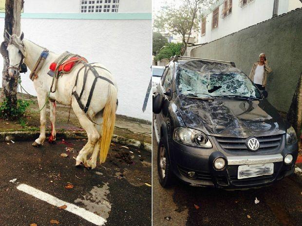 Cavalo se solta de carroça e sobe em carro estacionado em Vitória, espírito santo (Foto: VC no ESTV)