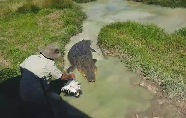 Rob Bredl atrai o crocodilo de estimação com uma galinha (Foto: Reprodução/YouTube/ViralHog)