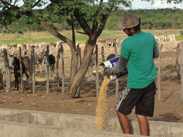 Animais conseguem se alimentar graças à ajuda de ONG internacional (Foto: Eduardo Aparício/Arquivo pessoal)