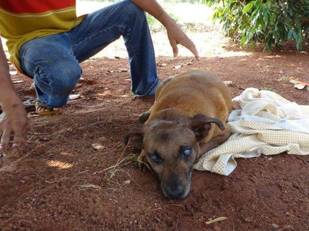 Animal ficou cego dos dois olhos e teve as unhas de pata arrancadas (Foto: Apas/Divulgação)