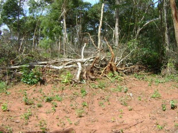 Policiais militares ambientais autuaram homem por desmatar 12 hectares de cerrado (Foto: Divulgação/PMA)