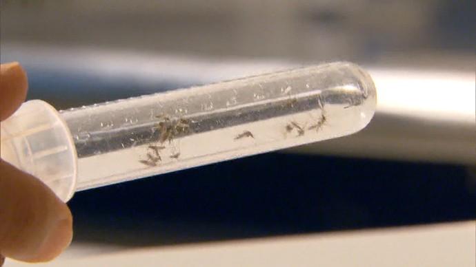 Pesquisadores da Ufba contam como descobriram o vírus zika (Foto: TV Bahia)