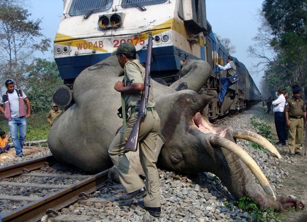 Funcionário observa cadáver do elefante morto em acidente nesta terça-feira (5) em reserva florestal na Índia (Foto: AFP)