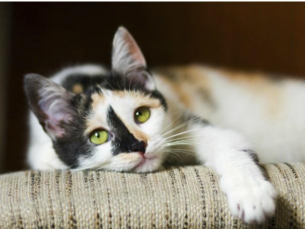 Quero saber - Por que os gatos ronronam? (Foto: Thinkstock/GettyImages)