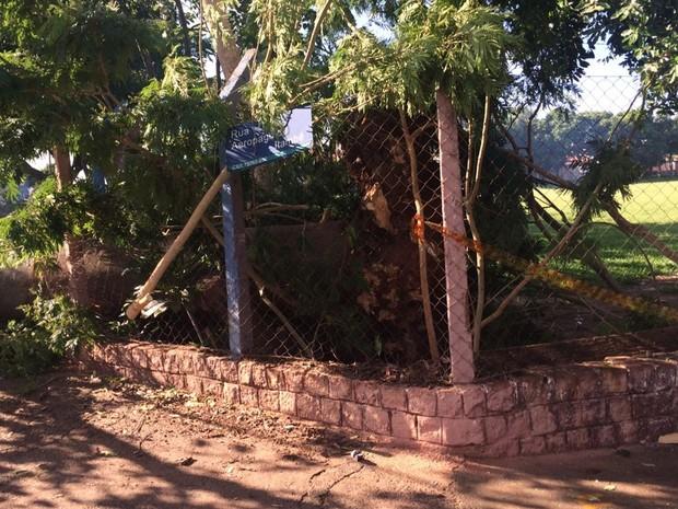 Árvore caiu e atingiu fios da rede elétrica (Foto: Graciela Andrade/TV TEM)