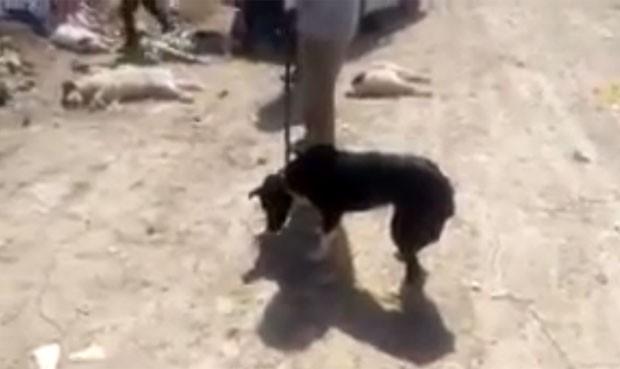 Vídeo mostra homens injetando ácido em um cachorro para matá-lo na cidade de Shiraz (Foto: Reprodução/YouTube/Reza Zadahmad)