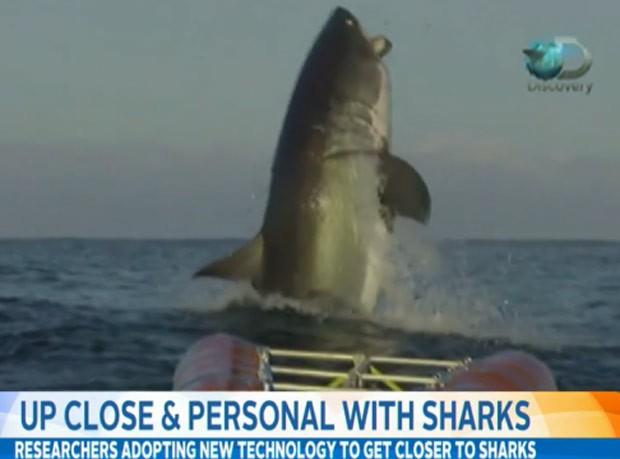 Tubarão branco foi flagrado dando salto fora da água (Foto: Reprodução/Imgur/Shivermyimgurs 7)