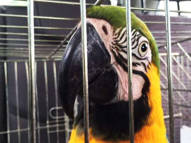 IAP autoriza adoção provisório de animais silvestre apreendidos e resgatados no PR (Foto: Divulgação/IAP)